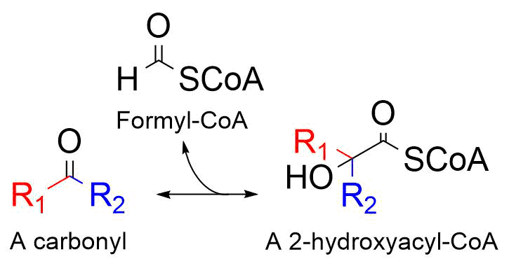 The reaction catalyzed by 2-hydroxyacyl-CoA lyase.