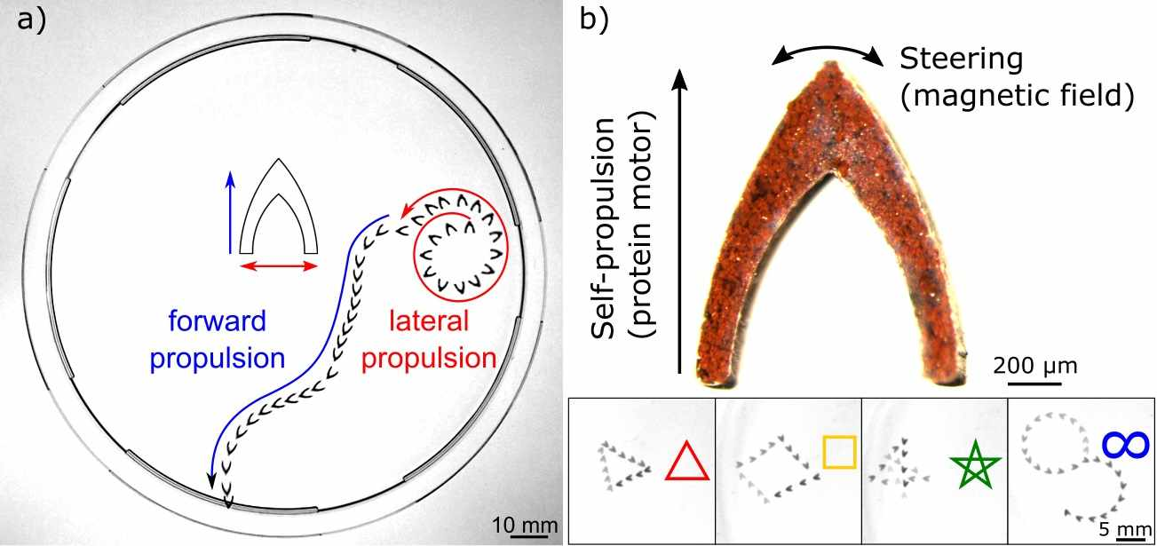 Programmable complex locomotion of protein motors